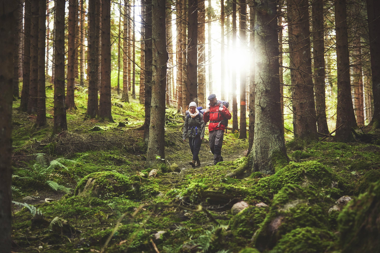 Bauerleden vandring i Småland
