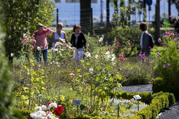 Kräutergarten Visingsö