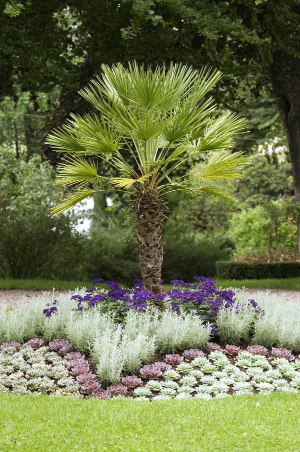Trädgården på Huseby bjuder på oväntade kombinationer