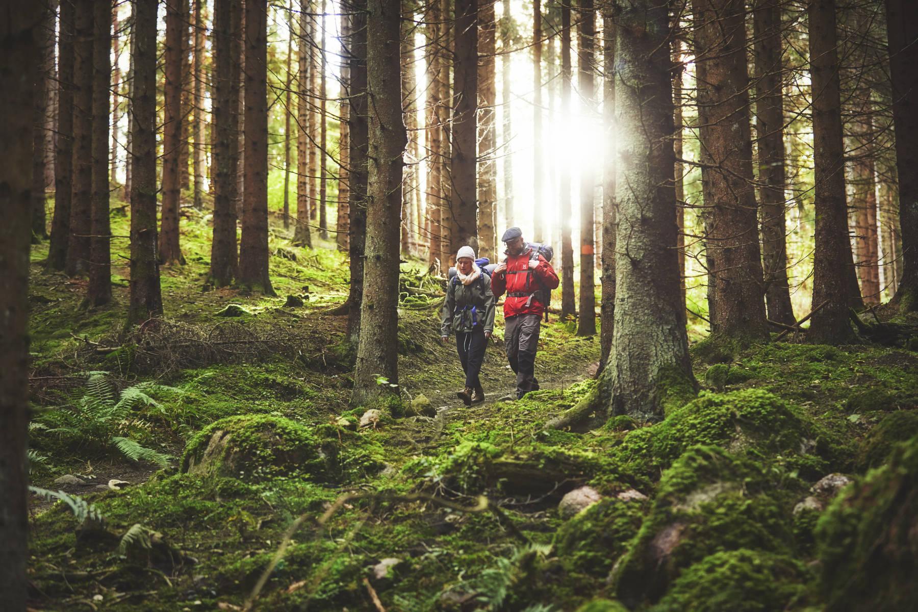 Fu Fuß im Wald auf dem John Bauer Wanderweg