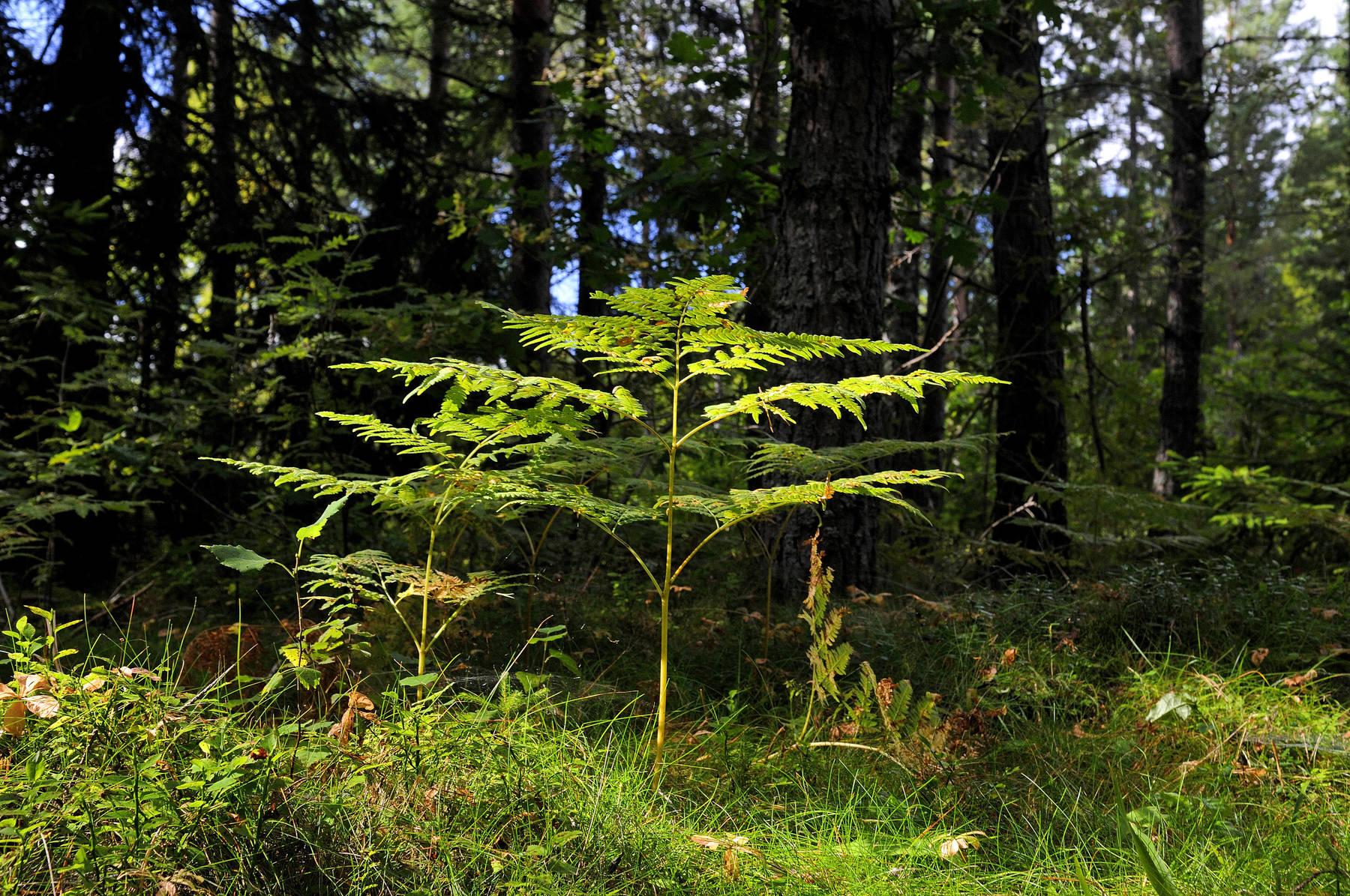 Das Jedermannsrecht beinhaltet Rechte und Pflichten für den Aufenthalt in der Natur