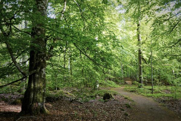 Edellaubwald von Bjurrkärr im Nationalpark Åsnen