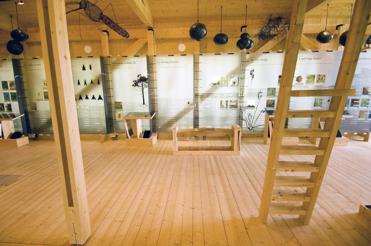 Ausstellung im Naturum des Nationalparks Store Mosse