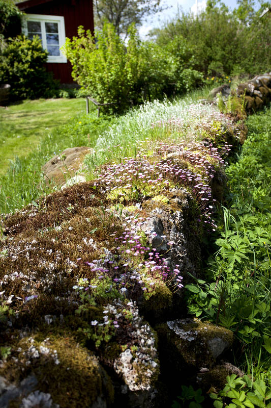 Typisch: Alte Steinmauern in Småland