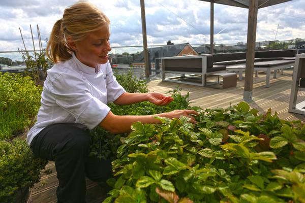 Organic farming on TAK