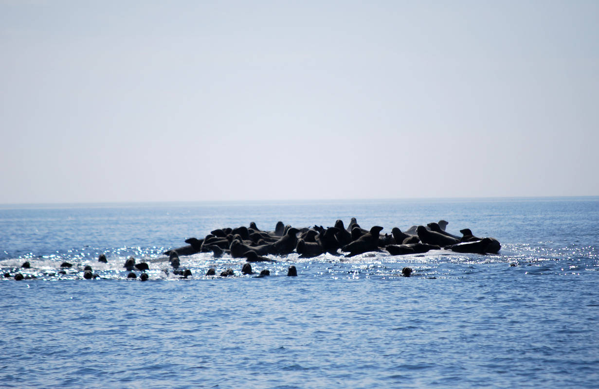 An island of seals in Västervik's archipelago