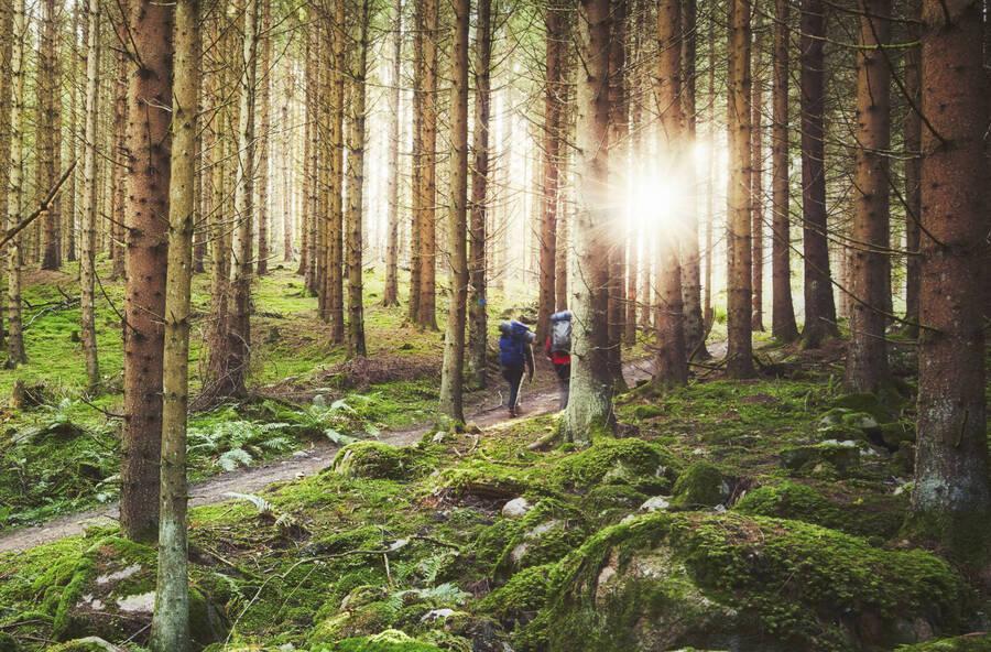 Hinking in Småland, Sweden