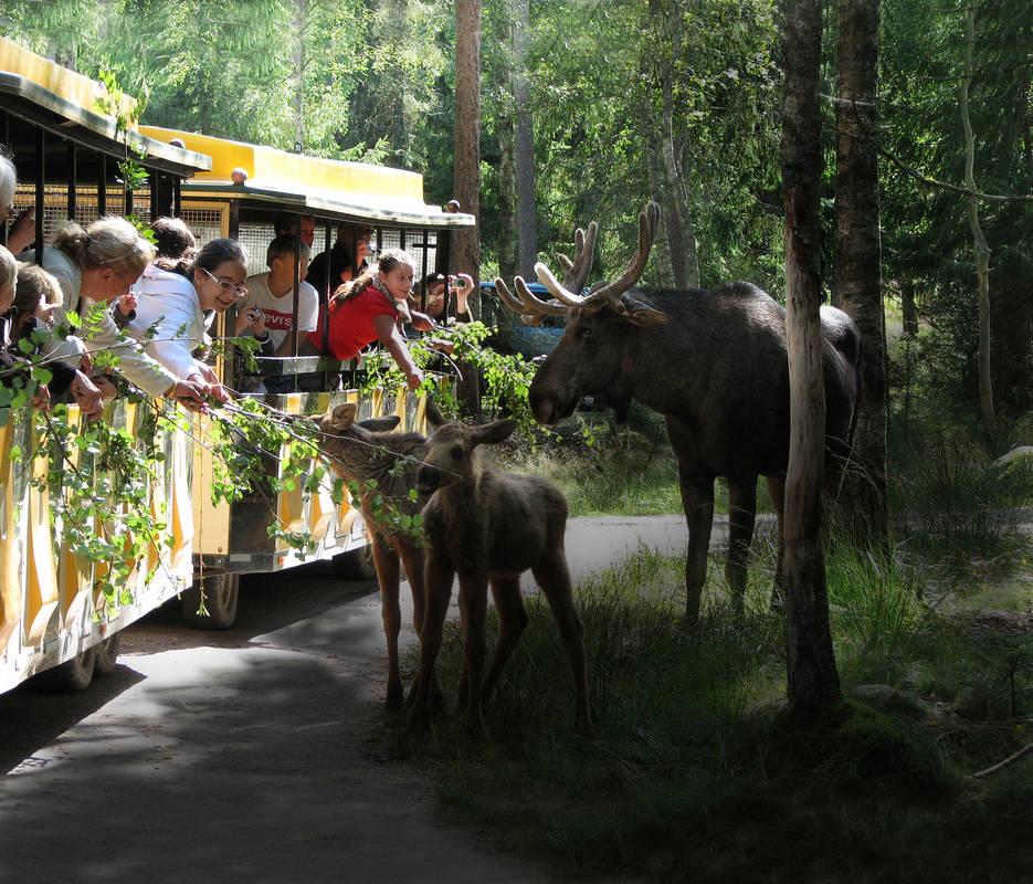Smålandet Markaryd Moose Safari