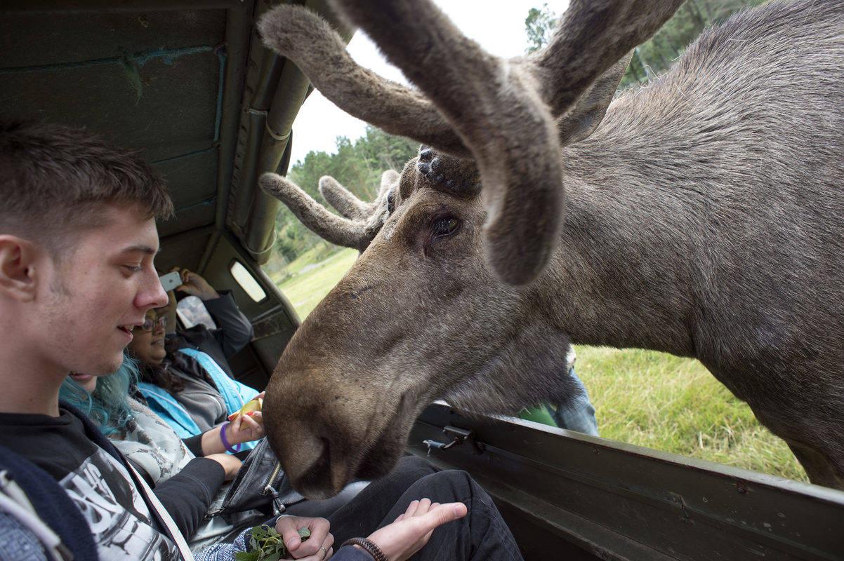 Virum Moose Park