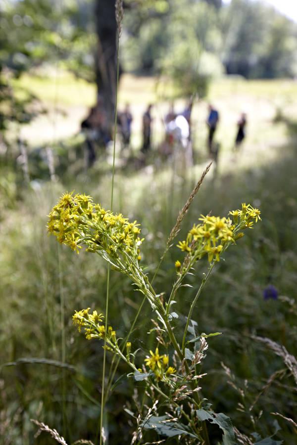 Blomma i förgrund