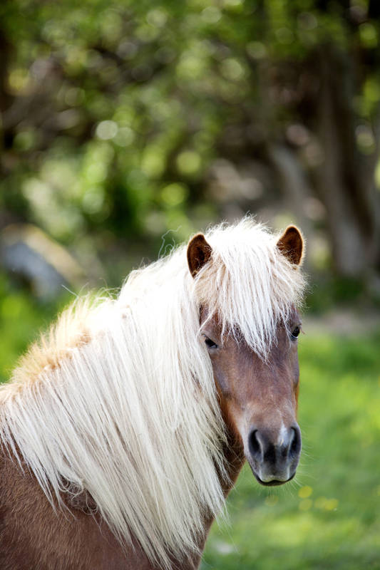 Horse outside in the summer