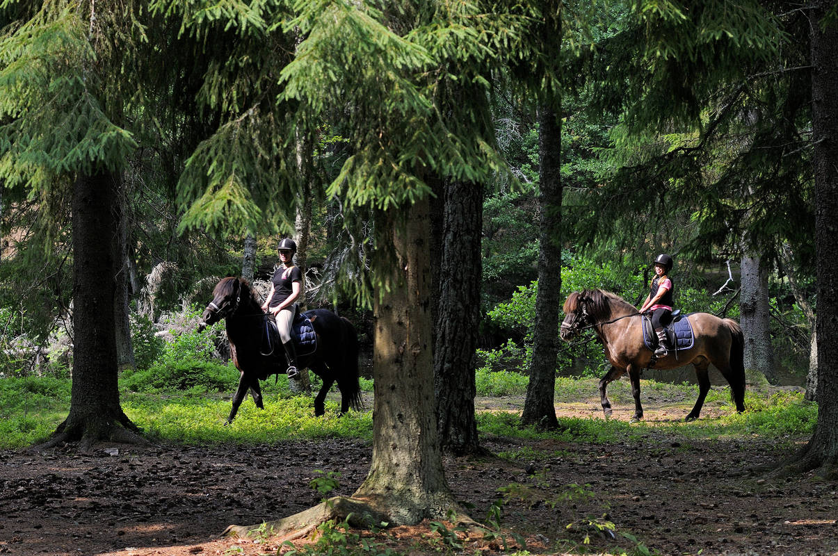 Riding in the forest at Kyrkekvarn