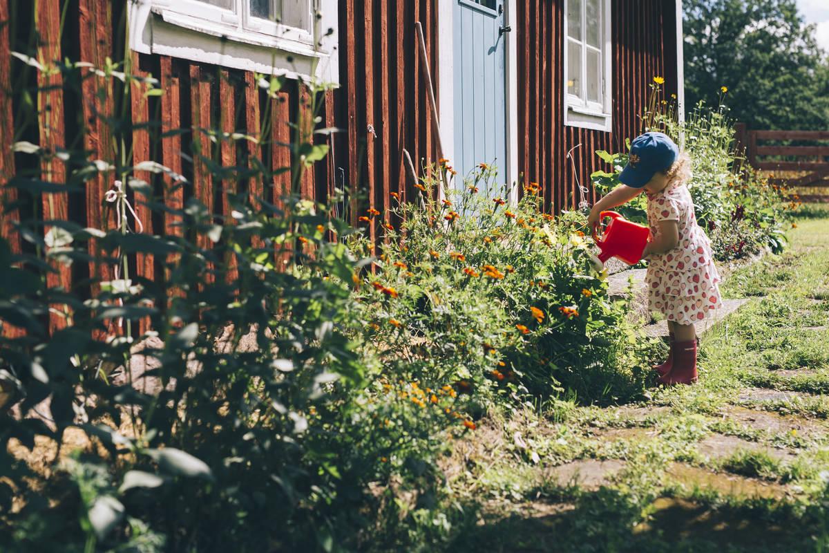Barn vid röd stuga Småland