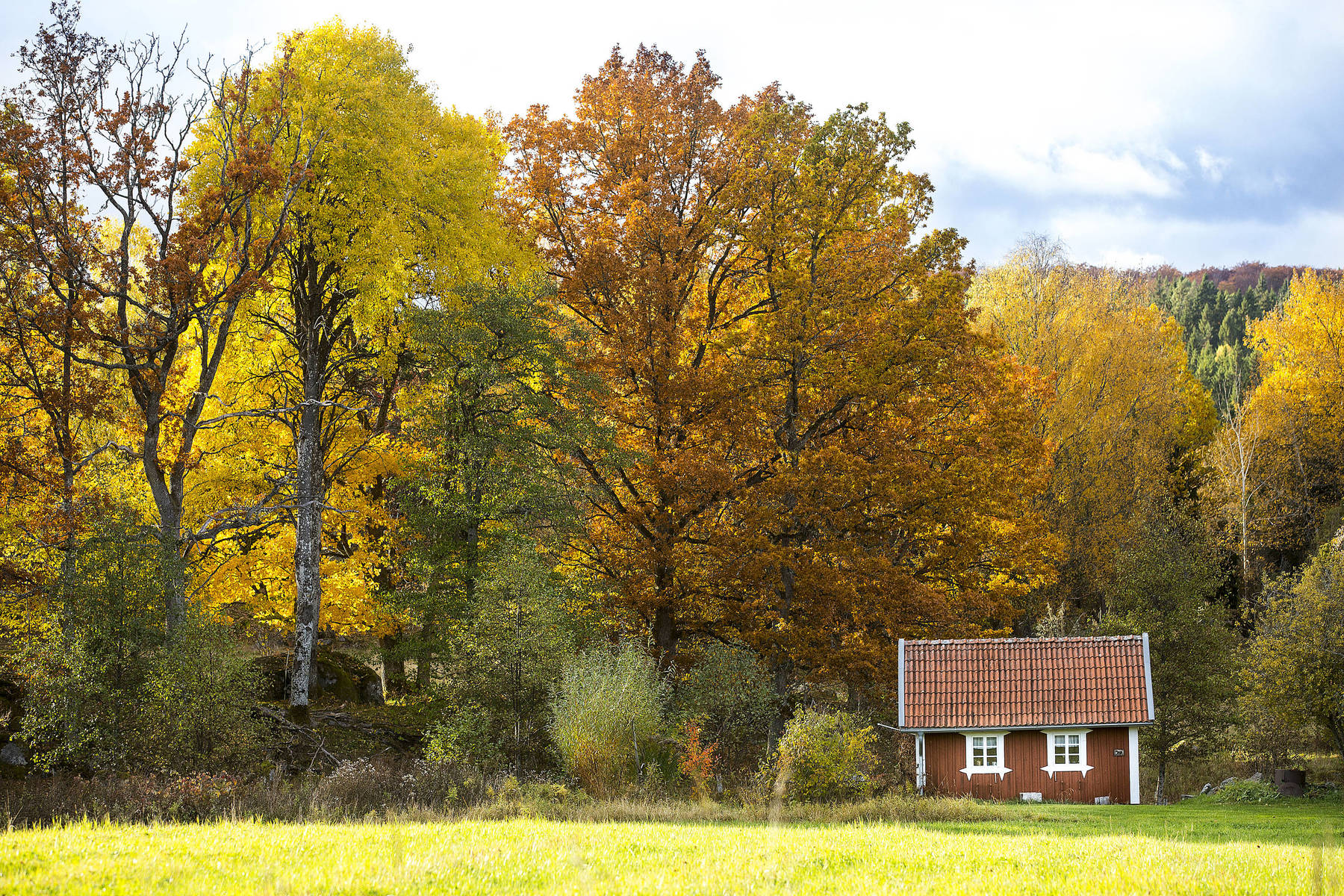 Small red cottage and autumn trees