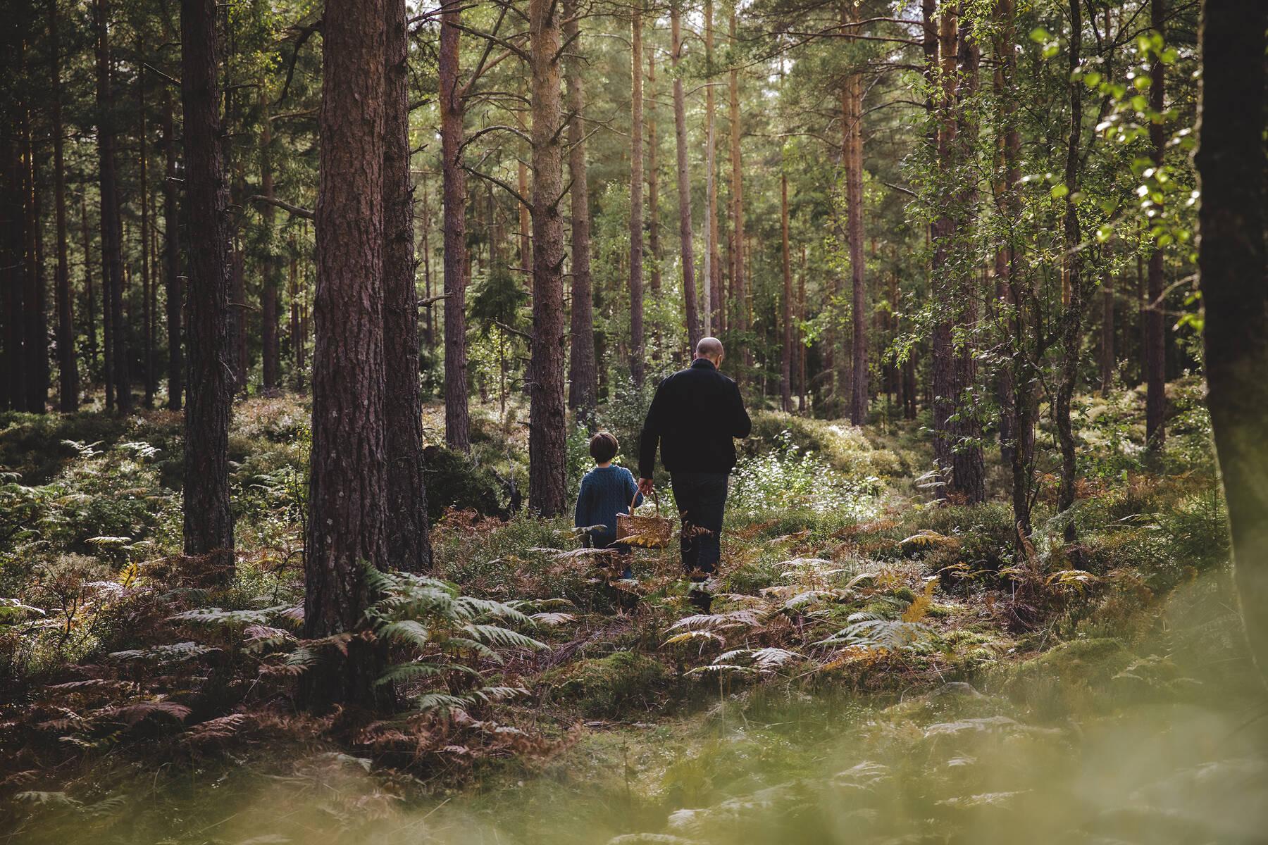 Man och barn plockar svamp i Småland