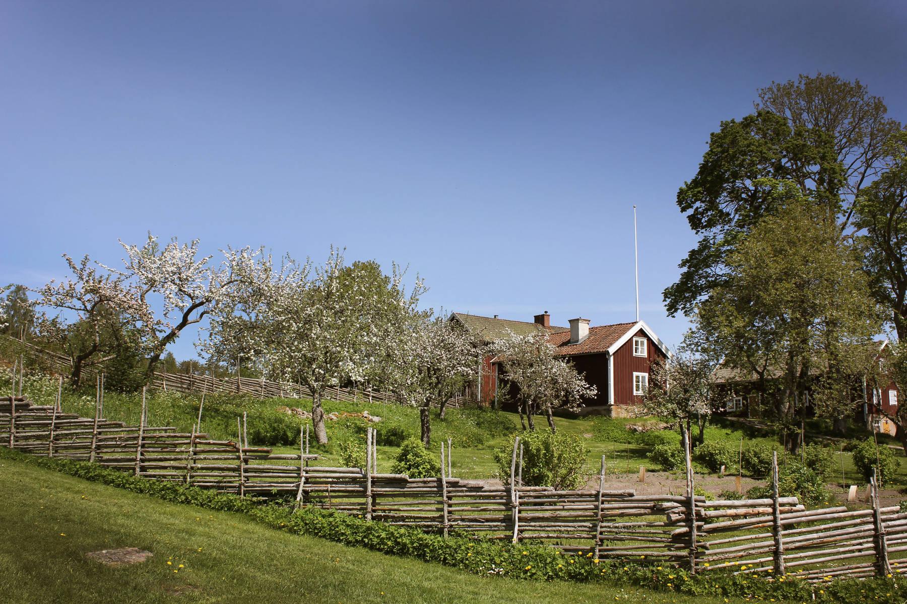 Röd stuga med blommande trädgård i Småland