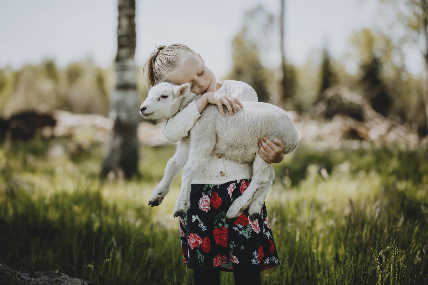 Flicka med lamm i Småland
