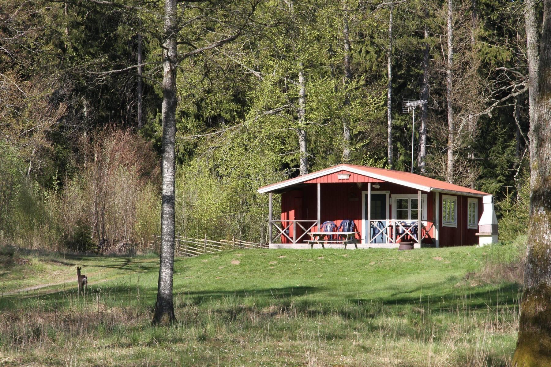 En röd stuga i solskenet på Getnö Lake Åsnen Resort med ett rådjur i trädgården.
