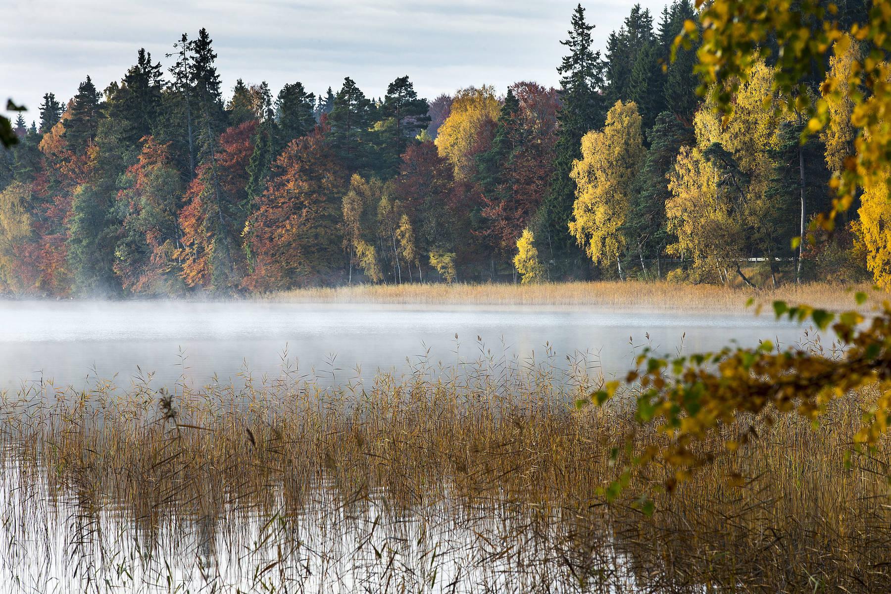 Helgasjön med morgondimma