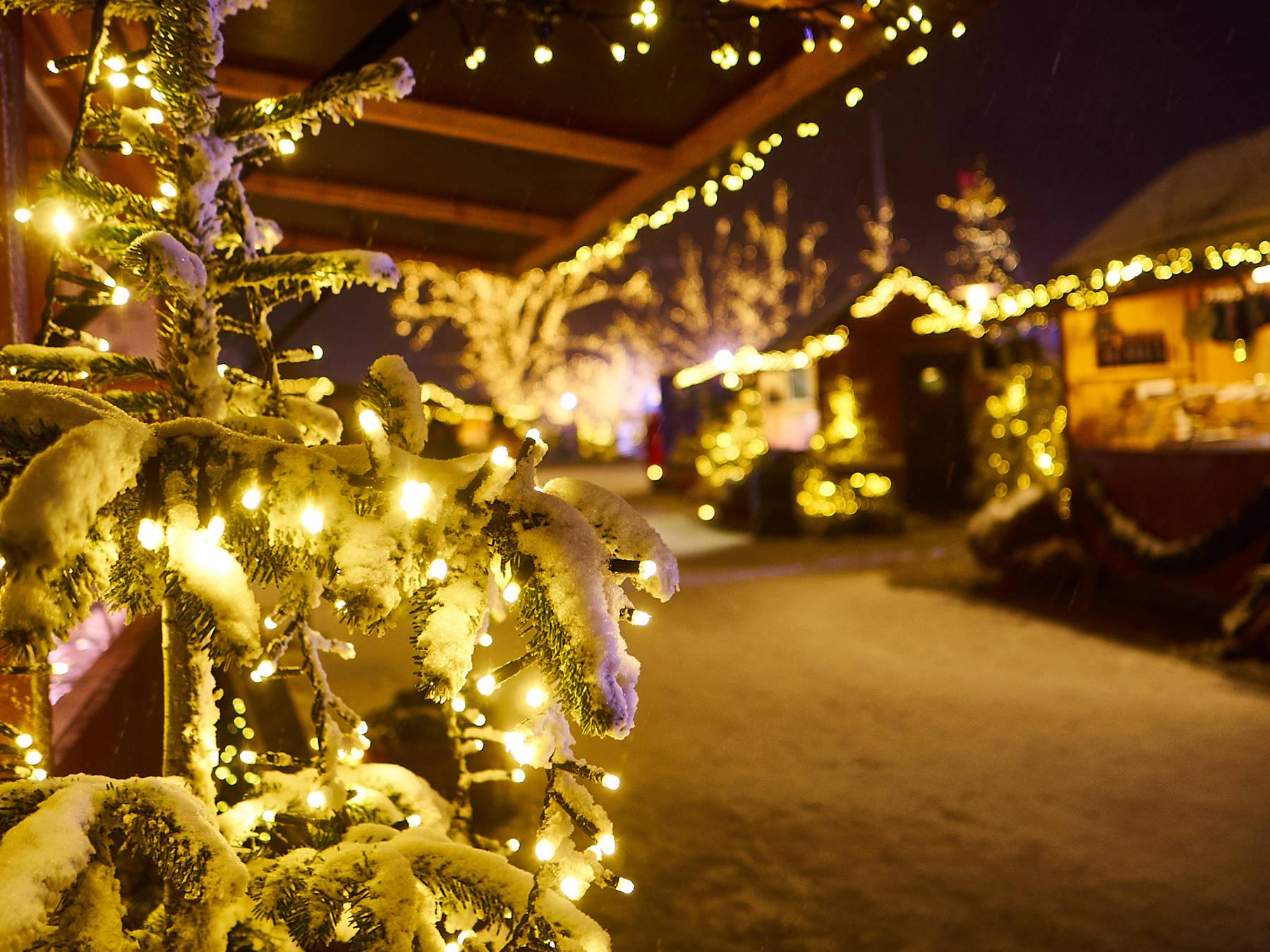 Julmarknad med snöklädda julgranar