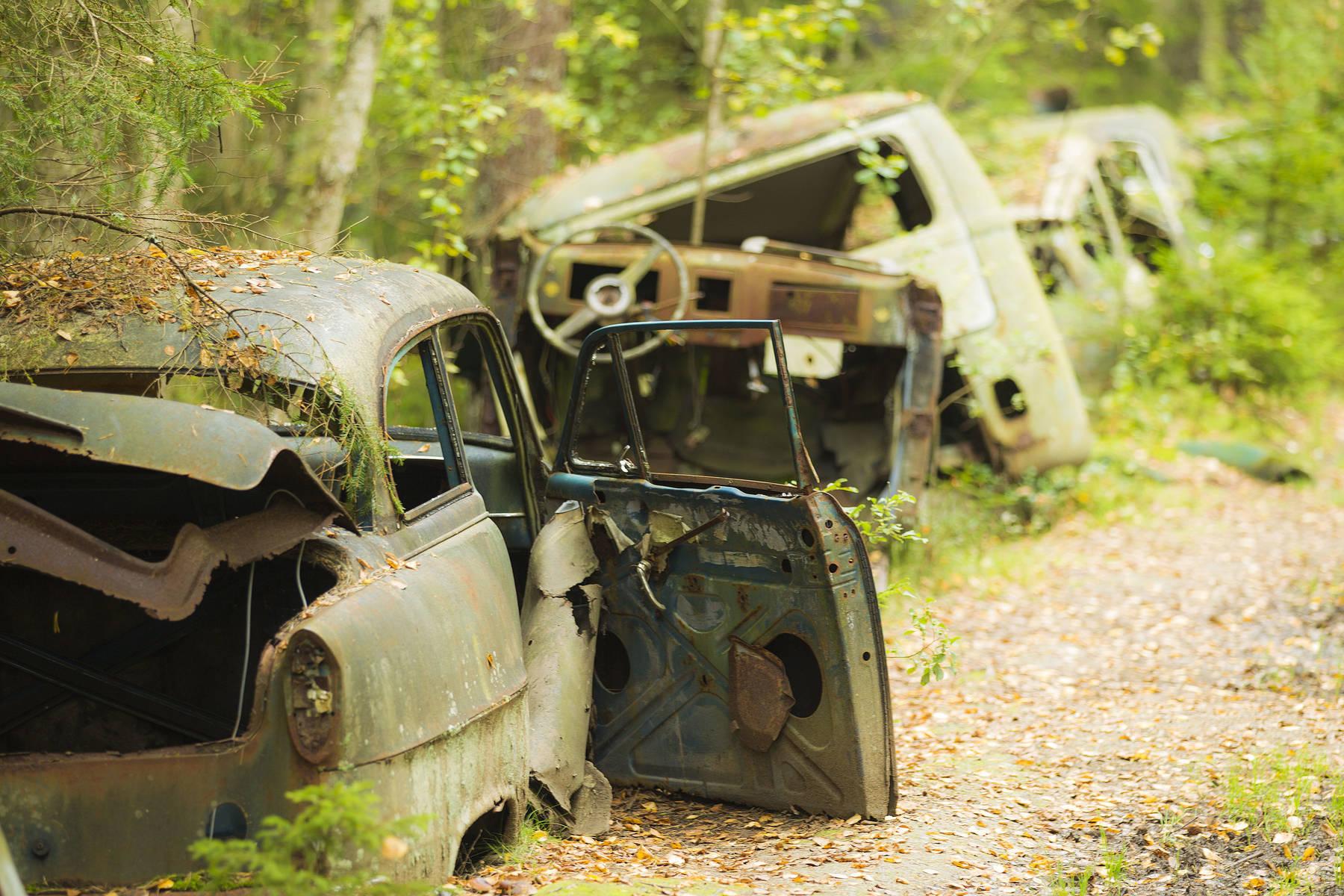 Bilarna har blivit en del av skogen