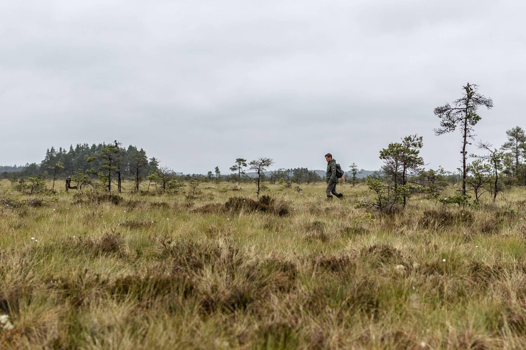 Store Mosse nationalpark och en man som går ute på mossen