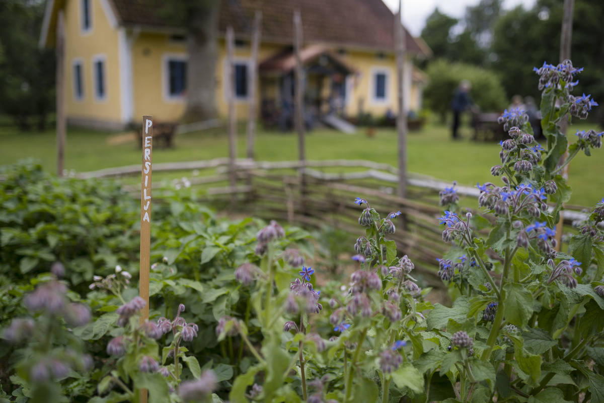 Odlingar på Hjärtenholms trädgårdscafé