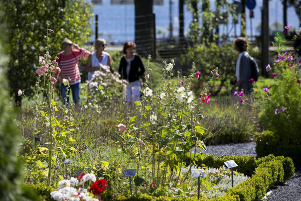 Örtagården på Visingsö