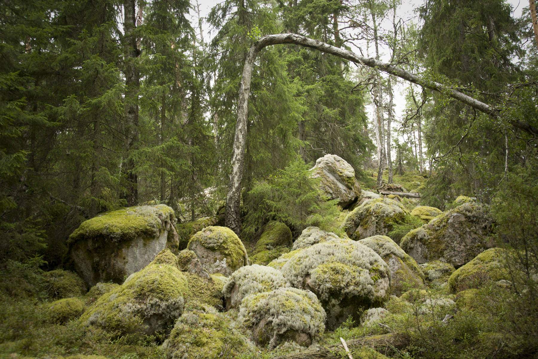 Norra Kvill nationalpark