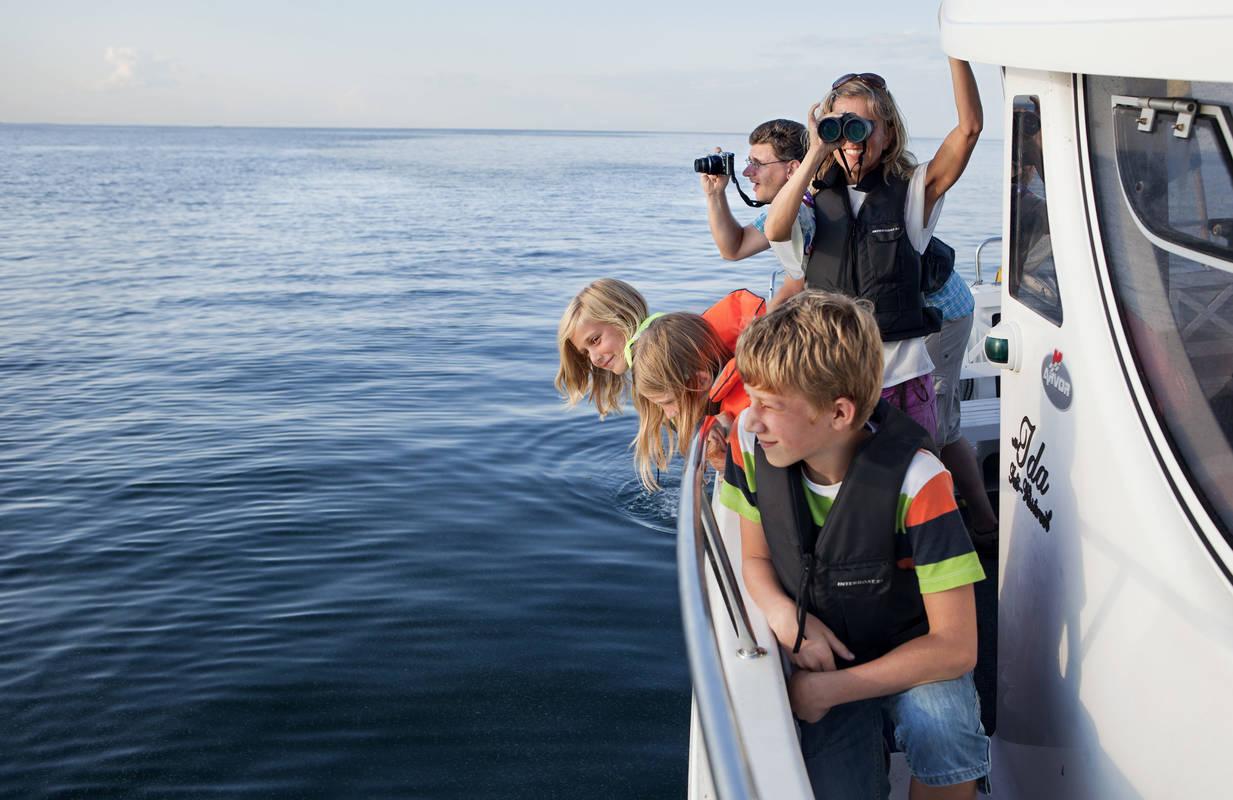 båt med barn som tittar på sälar