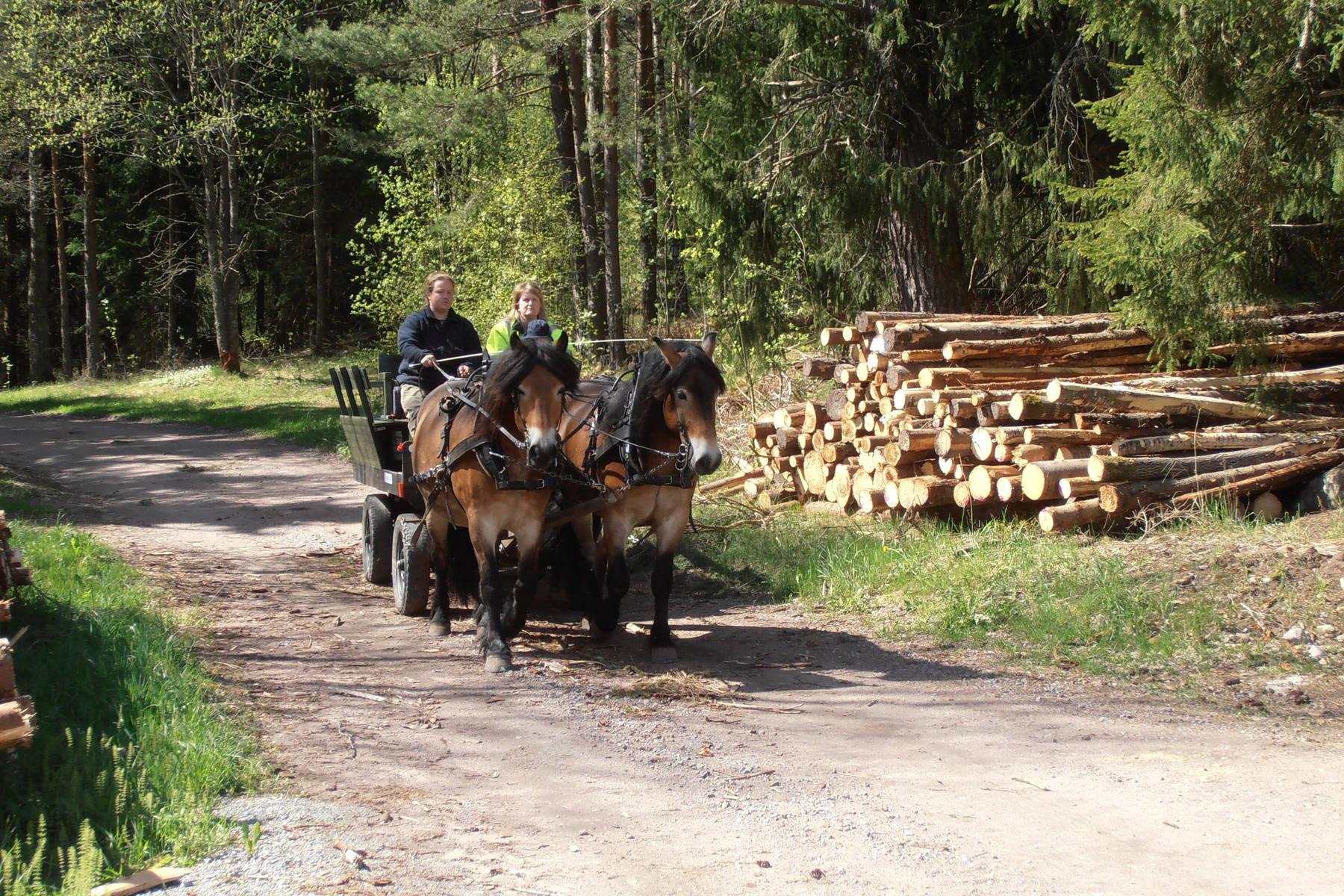 Häst och vagn genom skogen