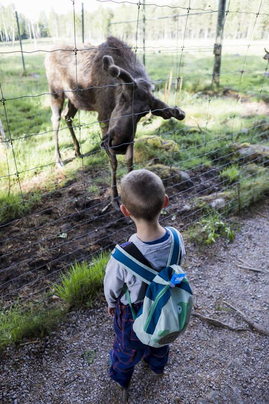 Grönåsens Älgpark, Kosta - barn tittar på älg