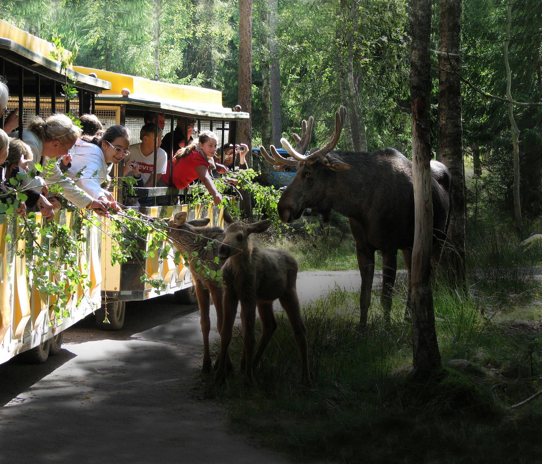 Smålandet Markaryds Älgpark